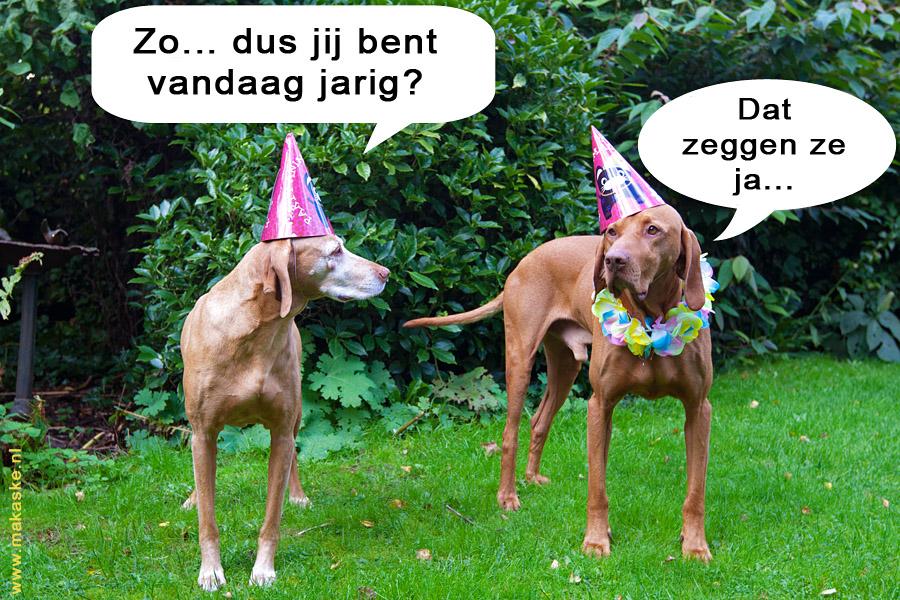 20101001-9I0X7815-nl.jpg